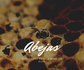 Sin abejas no hay comida