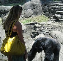Animal behavior training