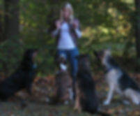 Orlando Dog Trainer with group of dogs