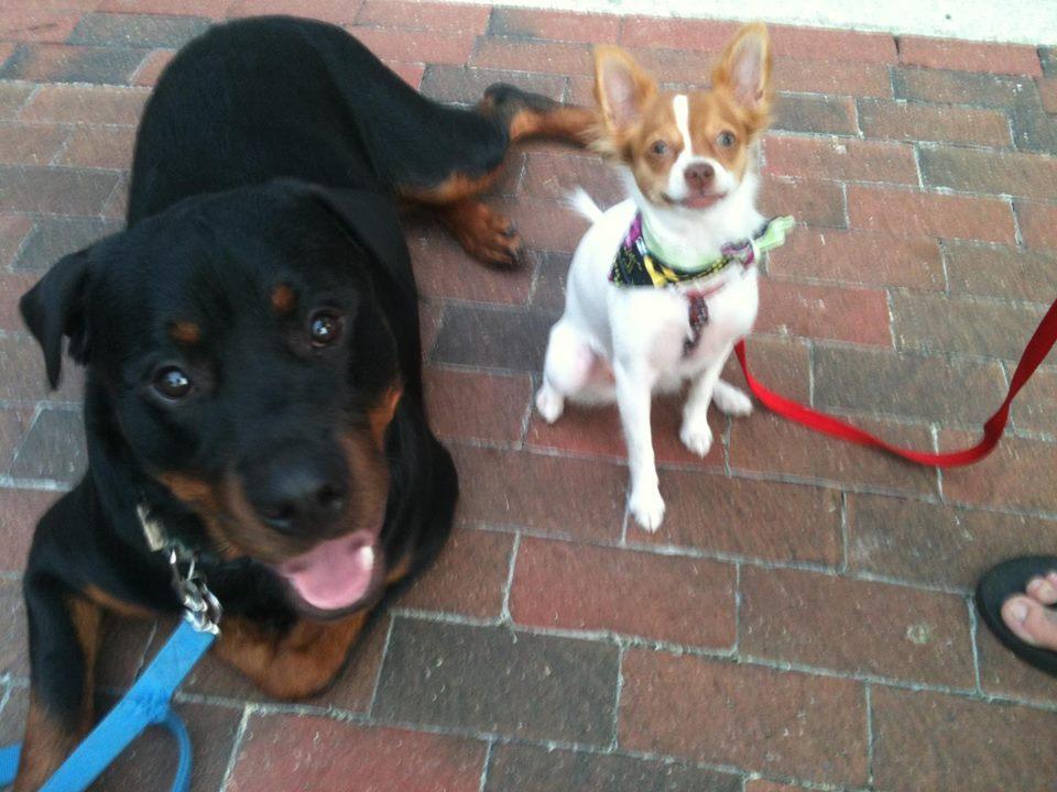 Dog Training at Lake Eola