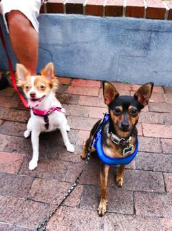 Dog group at Lake Eola