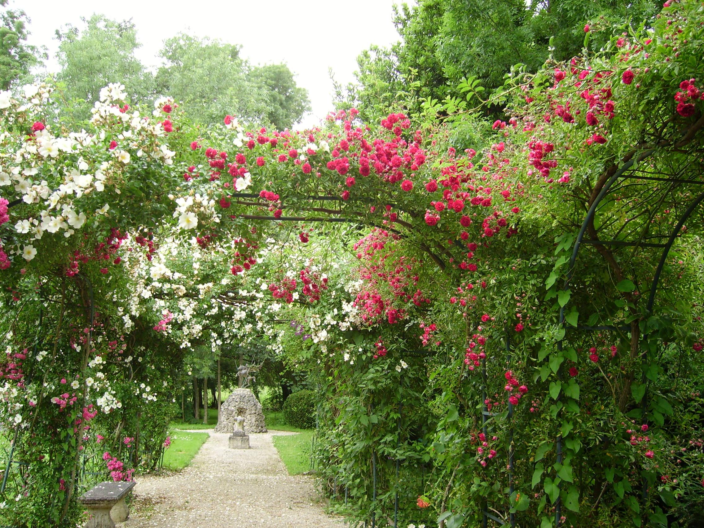 pergola des roses