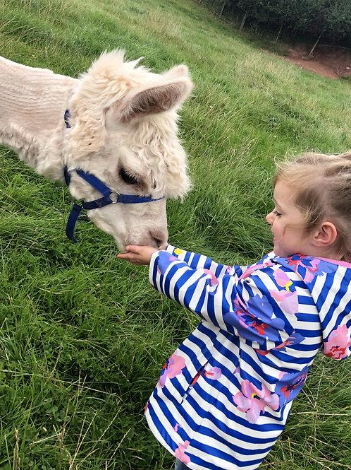 Adult and Young Child Alpaca Trek Voucher