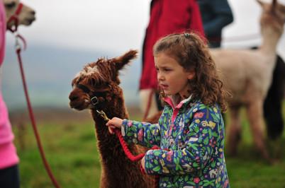 Alpaca My Boots   Wales   Trekking   Brecon Beacons