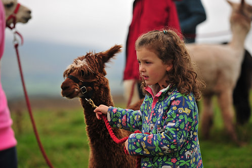 Child Alpaca Trek Voucher