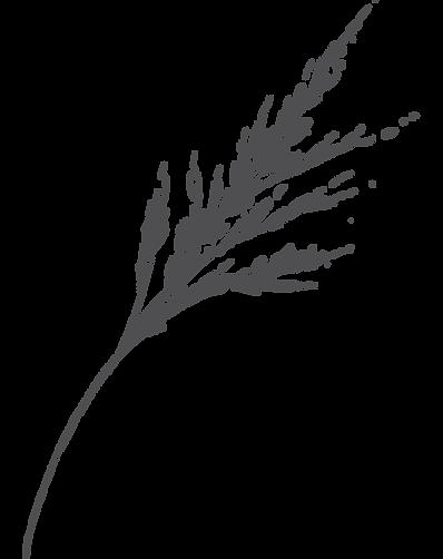 botanica10.png