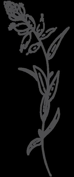 botanica2.png