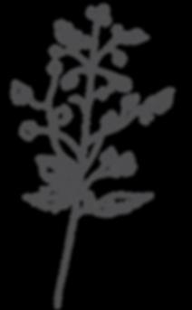 botanica7.png