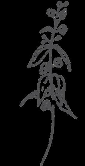 botanica20.png
