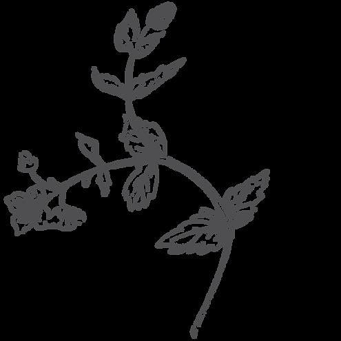 botanica1.png