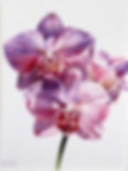 compressed%20ws%20Orchid_edited.jpg