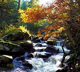 otoño_edited_edited.jpg