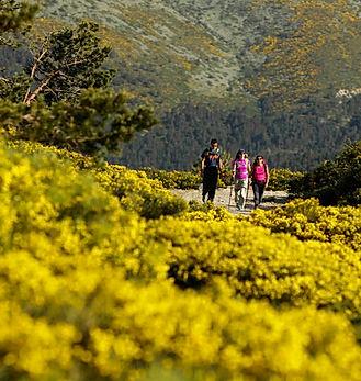 E Sierra Guadarrama Mayo 2016 105.jpg