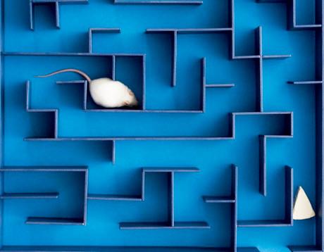 Rat-In-A-Maze