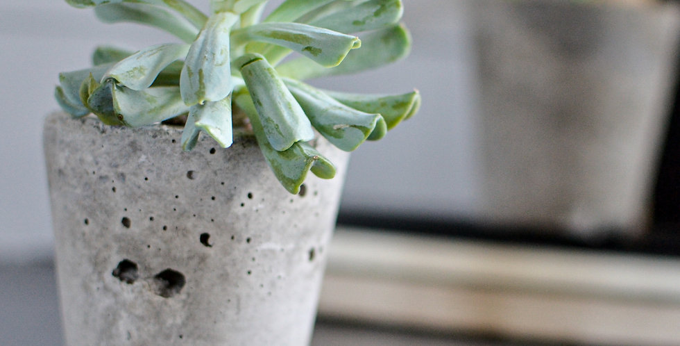 Small Concrete Planter