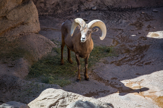 The Desert Museum! Wildlife Reserve.