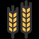 barley_harvest_grain_plant_food_wheat_cr
