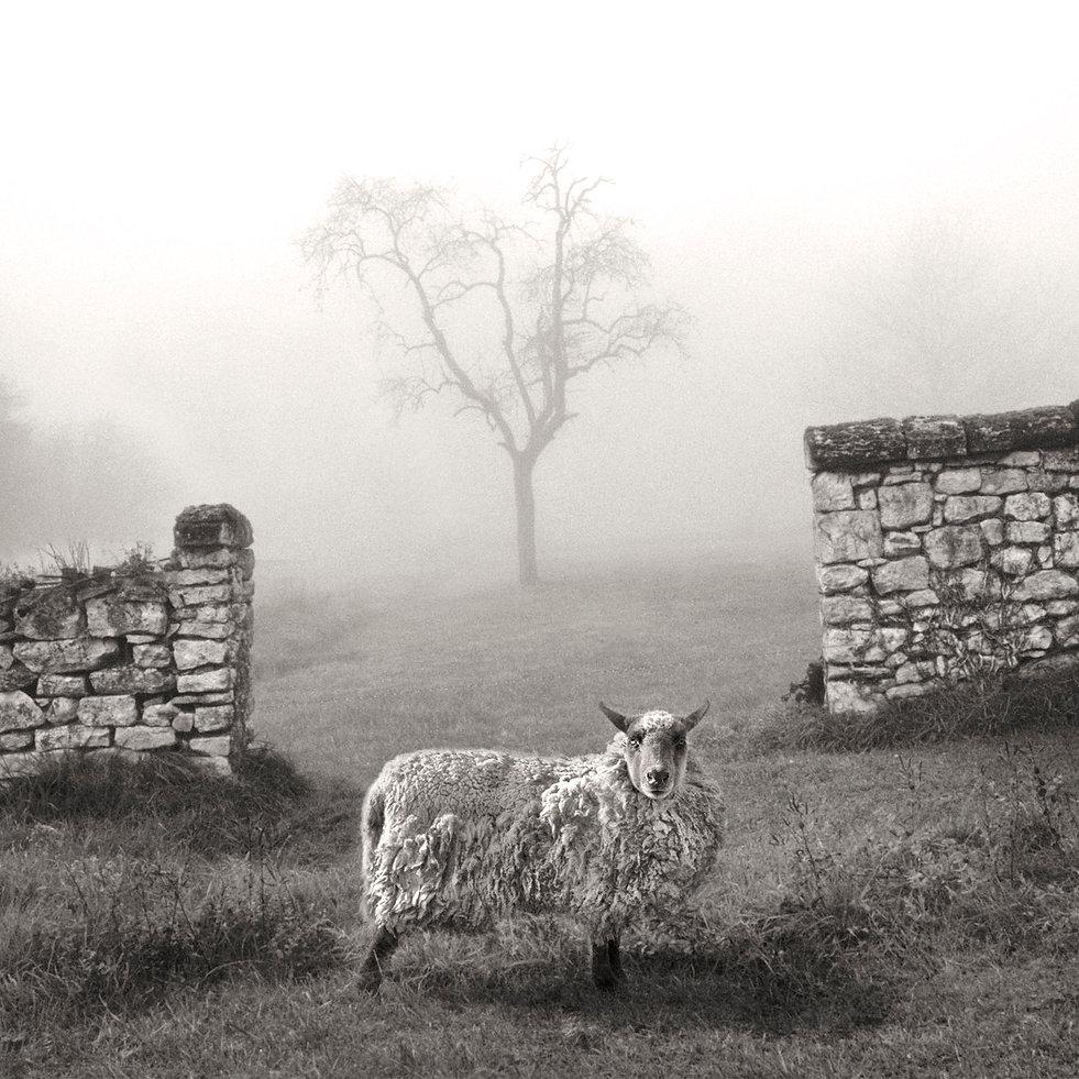 le mur et le mouton - NB-VF3.jpg