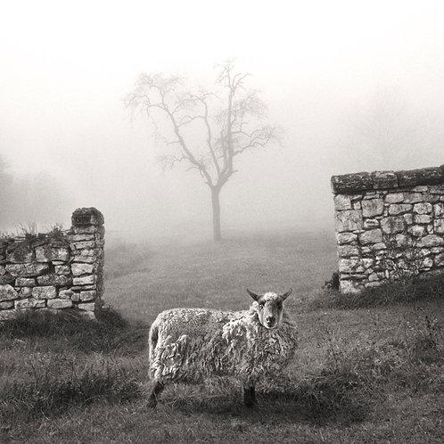Le mur et le mouton