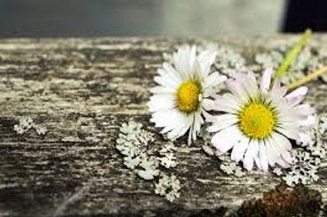 two daisies.jpg