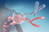 telomere-length-biology-500x330.png