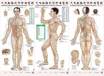 BodyAcupressurePoints.jpg