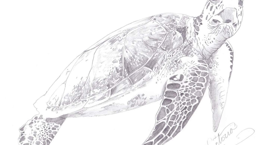 """""""Turtle Time"""" by artist: Tori Michelle Carter"""