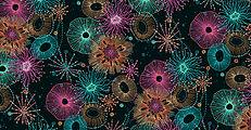 2250_X_Reef.jpg