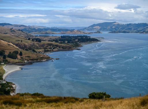 Otago Penninsula - New Zealand