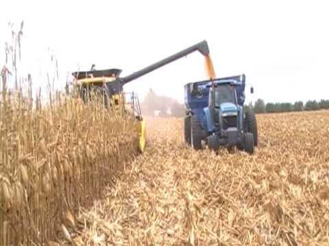 nh harvest.jpg