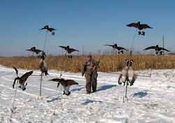 The goose tree system.jpg