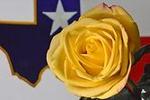 yellow-rose-of-texas-dennis-nelson.jpg