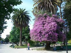 Talca   Chile