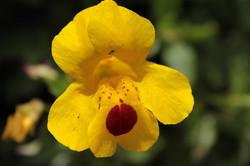 Observación de Flora y Fauna