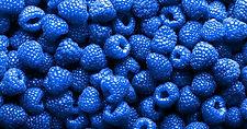 blue-raspberries-1200x630-c-ar1.91.jpg