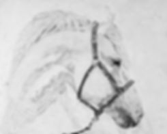 cinderella's ride