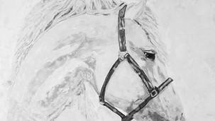 cindarella's ride