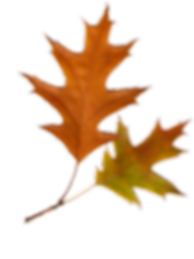 kisspng-autumn-leaves-autumn-leaf-color-