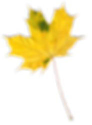kisspng-maple-leaf-autumn-leaves-image-r