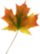 kisspng-maple-leaf-autumn-leaves-5af8fe8