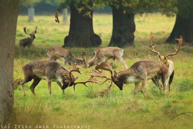 Deer Week 2016... #4