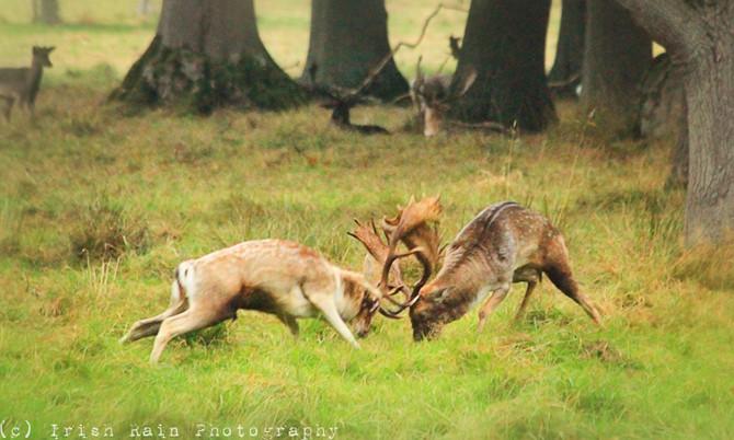 Deer Week 2016... #5