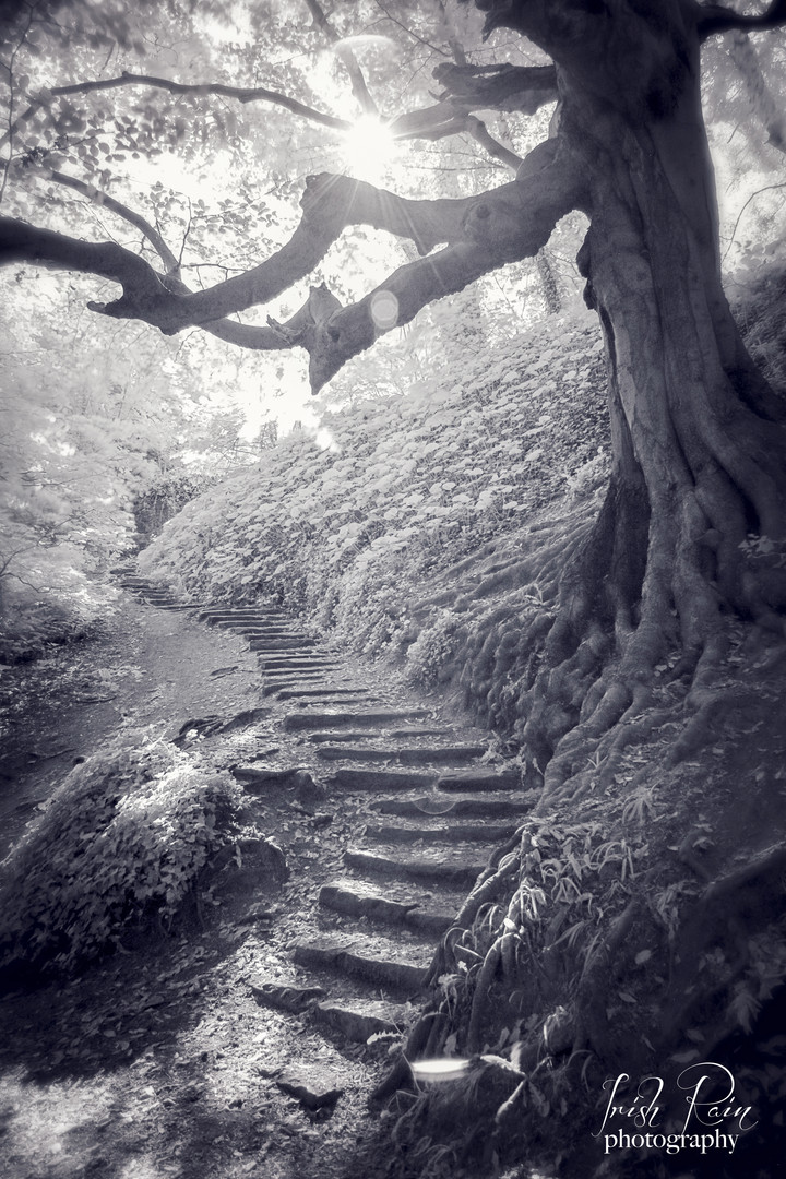 infrared tree path magical top ten dubli