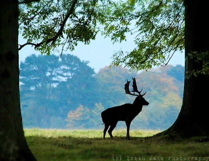 Deer Week 2016... #2