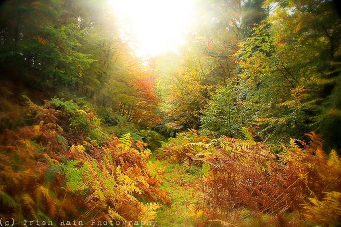 More Autumn Beauty...