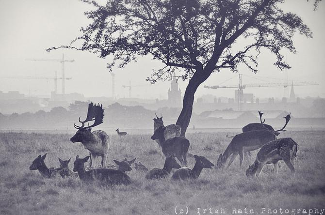 Deer Week... #3