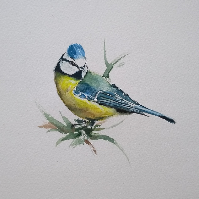Blue Tit in watercolour