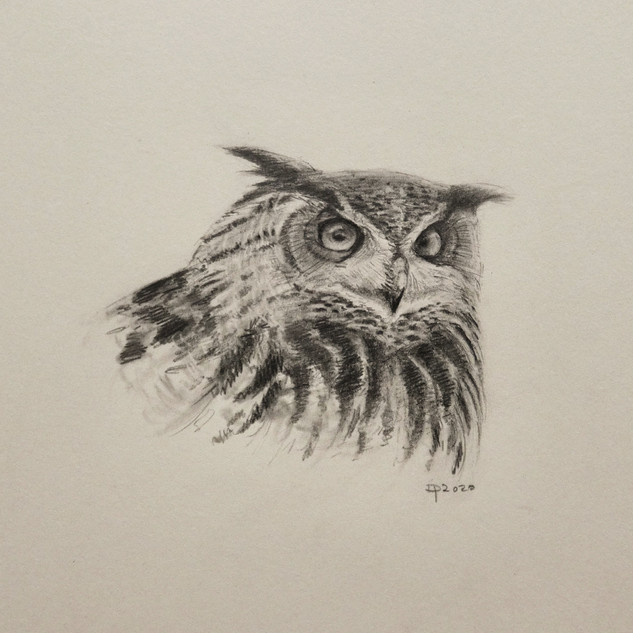 Eagle Owl in pencil