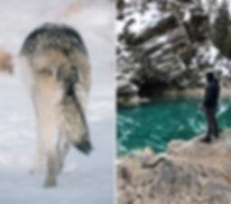 siren_creatives_arcteryx_wolves_canada_2