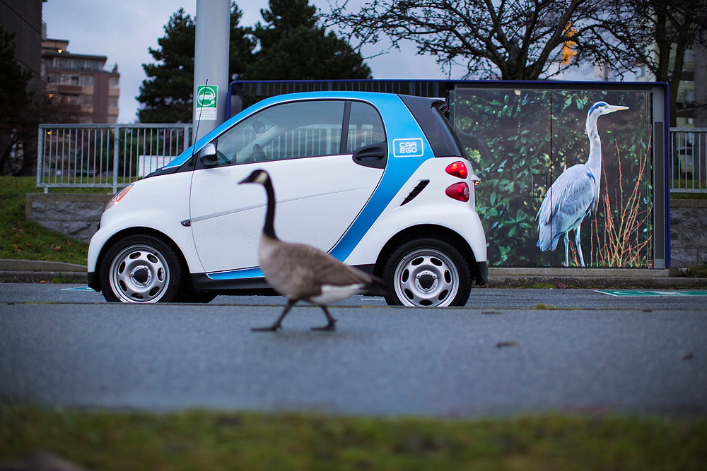 SIREN Car2go Smart Vancouver Canada Ryan Koopmans